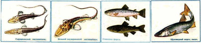 Рыбы в красной книге