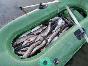 Вниз по Белой. Или рыболовные туры со спиннингом