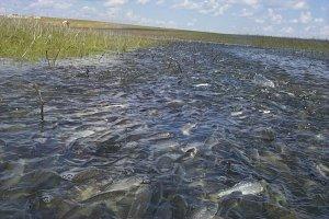 Рыбоходы, искусственные нерестилища
