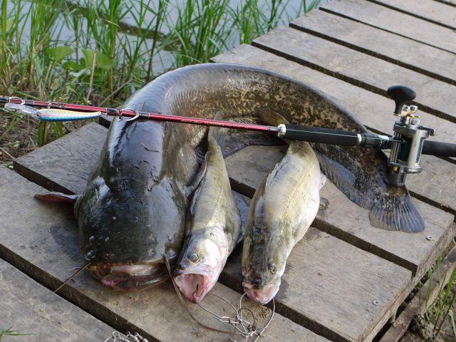 Рыб в донских водоемах стало больше