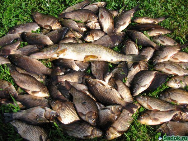 рыбалка на белой в иркутске