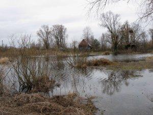 В глуши Полесских болот