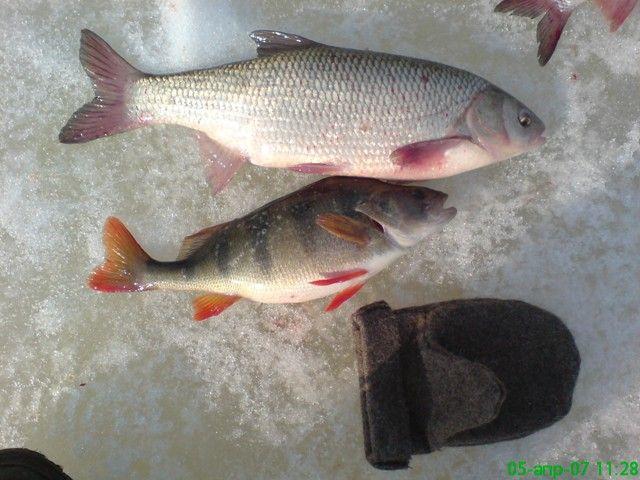 рыбалка язь зимой