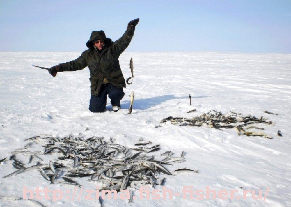 прикорм для зимней ловли плотвы