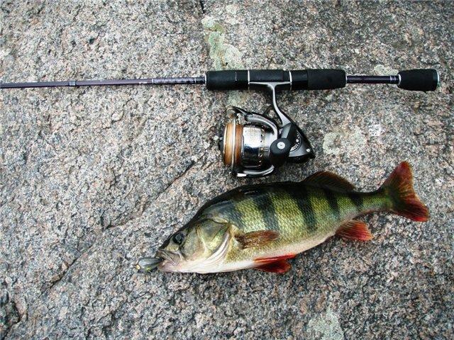 прикорм рыбы на реке