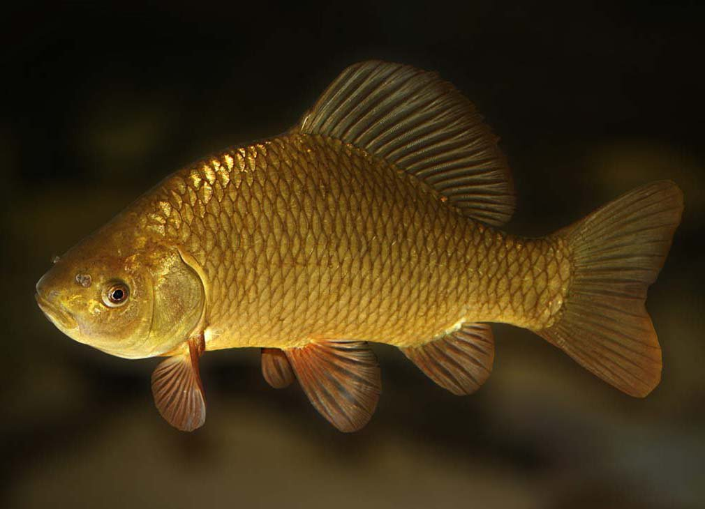какая рыба клюет при понижении давления