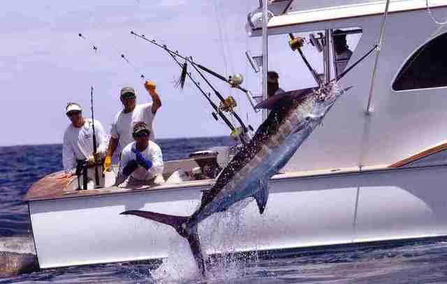 Картинки по запросу рыбалка на марлина