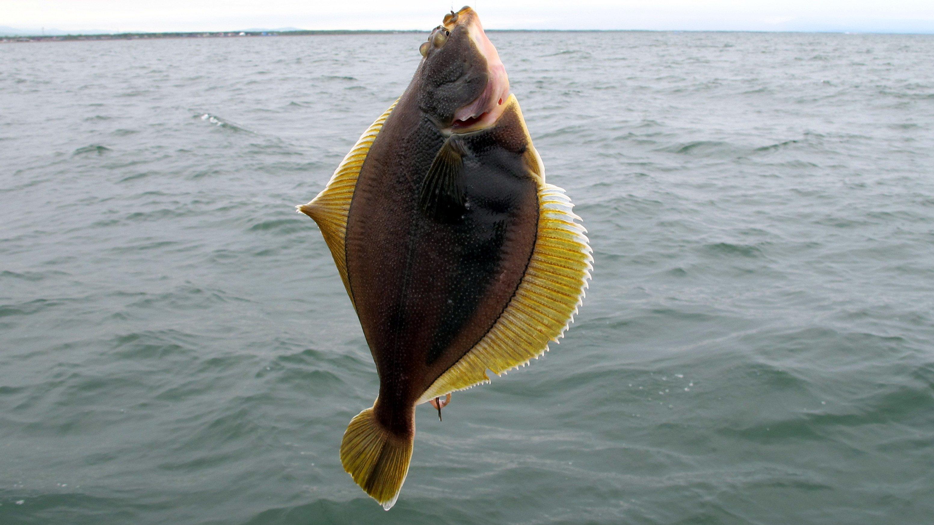 где ловить рыбу в челябинской области