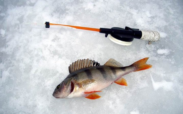 рыбная ловля на мотыля