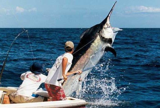 как ловить рыбу в тунисе
