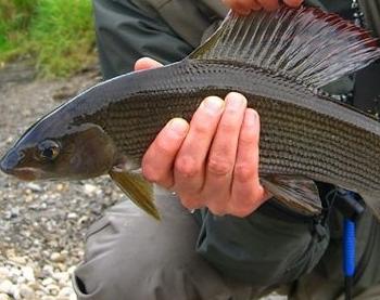 способы ловли рыбы видео