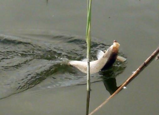 как ловить рыбу в камышах