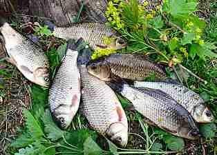 прикорм для рыбалки видео