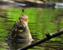 Удачная температура для рыбалки