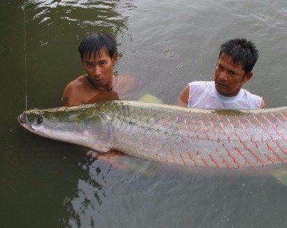 Календарь рыболова в первой декаде апреля | Готовимся к рыбалке это время