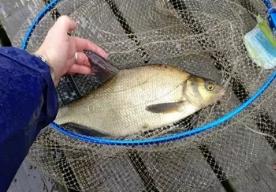 Идём на рыбалку за лещём и плотвой