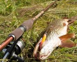 Рыбалка, все для новичков