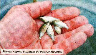 Воспроизводство аборигенных рыб Азовского моря