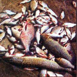 Осенняя рыбалка выходного дня