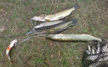 Рыбалка на левом берегу Десны