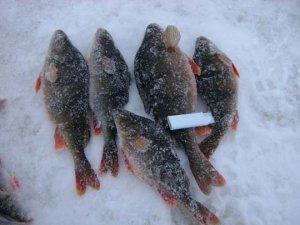 Азартная ловля на весеннем льду