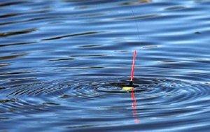 Царь-рыба из карантинной бухты