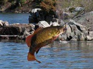 Рыболовство в США: некоторые особенности и проблемы