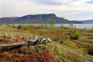 Будующие рыболовные угодья Сибири
