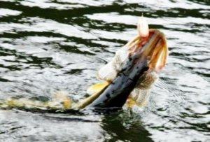 Пять щук. Или рыбалка на Черно-Источинском пруду