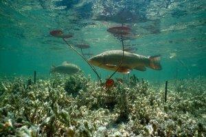 Идилия рыбной ловли