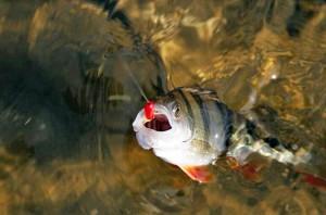 Ловля рыбы летней удочкой с мормышкой