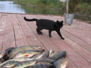 О распределение рыб в водоеме