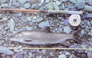 Ловля на колымских реках