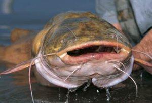Язык жестов. Учимся понимать рыбу