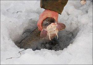 Ловля сома зимой проверенным методом