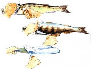Как снять с рыбы кожу
