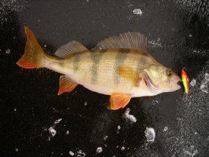 Как изготовить блесну для зимней рыбалки