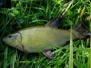 Все для рыбалки в Беларуси