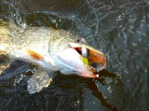 Тонкости рыбалки со спиннингом
