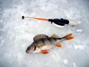 Рыбалка или как найти рыбу