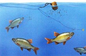 Ловля рыбы на фидер
