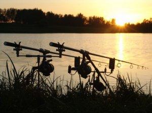 Карповая рыбалка и ее хитрости