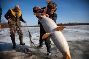 Ловля летучей рыбы оборудованием для донной ловли