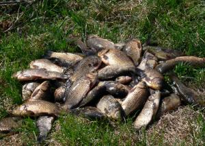 Секреты летней рыбалки на карася