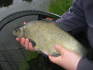 Советы начинающим рыболовам