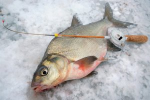 Как ловить леща зимой