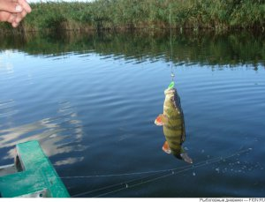 Рыбалка и ее основные виды