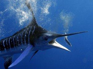 Отправляемся на рыбалку в… рай!