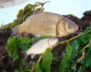 Хорошему рыбаку - зима не помеха