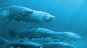Специфика ловли озёрной рыбы